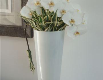 Orchidée evian